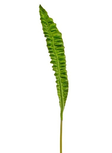 Morhipo Home Yeşil Yaprak Yeşil